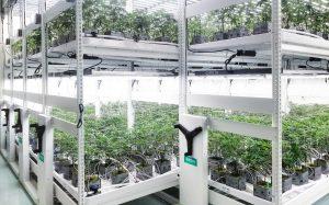 2 tier cannabis indoor farming racking system