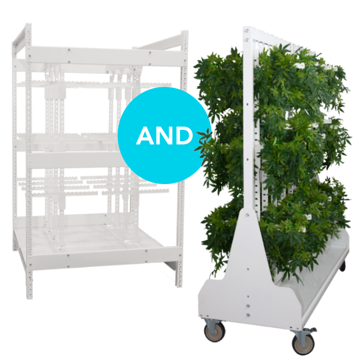 better cannabis drying system