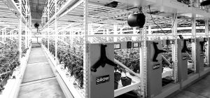 cannabis high-density mobile grow cultivation systems