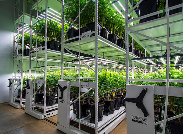 colorado-indoor-cannabis-facility-grow-system