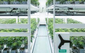 cannabis 2-tier vertical racking