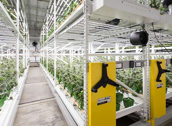 high yield cultivation grow tables
