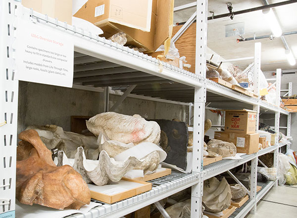 museum widespan shelving large collection storage